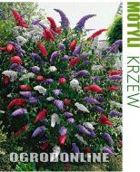 Budleja Dawida ZESTAW Tricolor RED - budleja_tricolor1.1.jpg