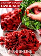 Jagoda Goji Big Lifeberry® - goji_big2.jpg