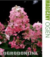 Hortensja bukietowa 'Magical Fire'® - h.magical.fire1.jpg