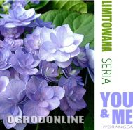 Hortensja ogrodowa You&Me 'Together' - h.you.together1.jpg