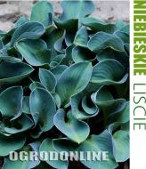 Hosta 'Blue Mouse' - hosta.blue.mousse1.jpg
