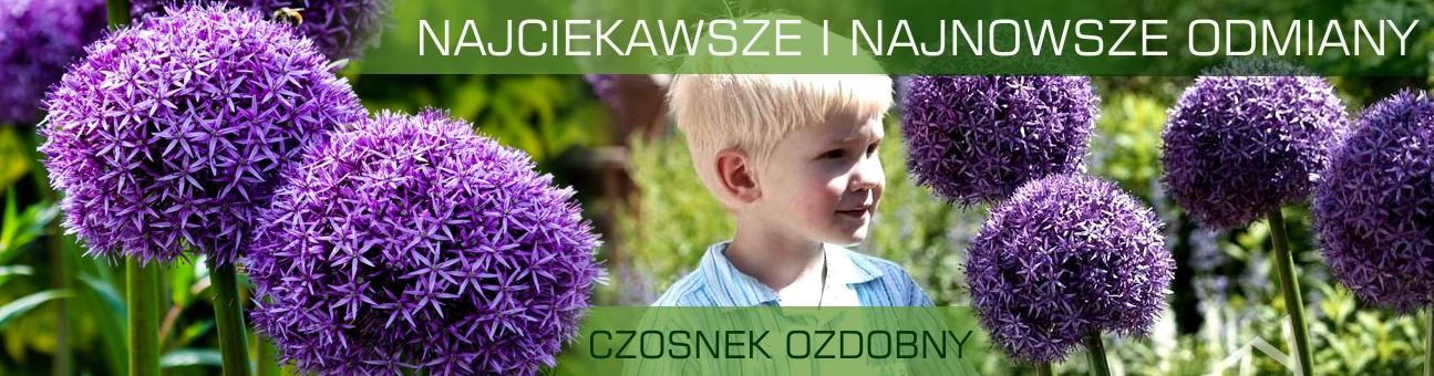 http://www.ogrodonline.com.pl/czosnek-ozdobny,101.html