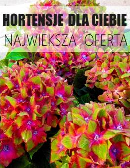 http://www.ogrodonline.com.pl/hortensje,98.html